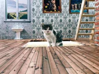 keeping-up-with-the-kattarshians-is-icelands-new-reality-tv-show-about-cats-body-image-1487683777